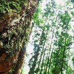 Hasil Hutan Indonesia