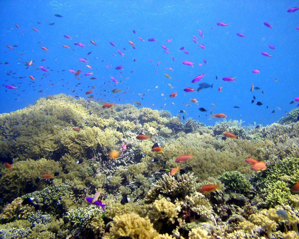 Hasil Laut Indonesia