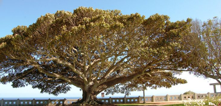 Kewajiban Manusia Terhadap Pohon