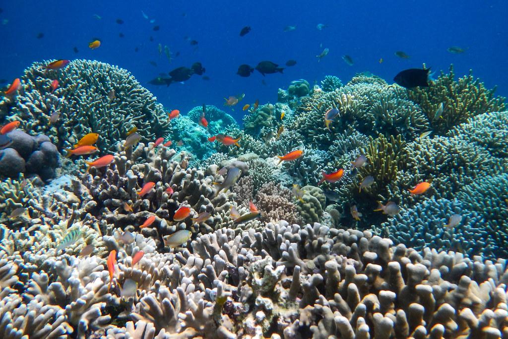 Hasil Perikanan Indonesia