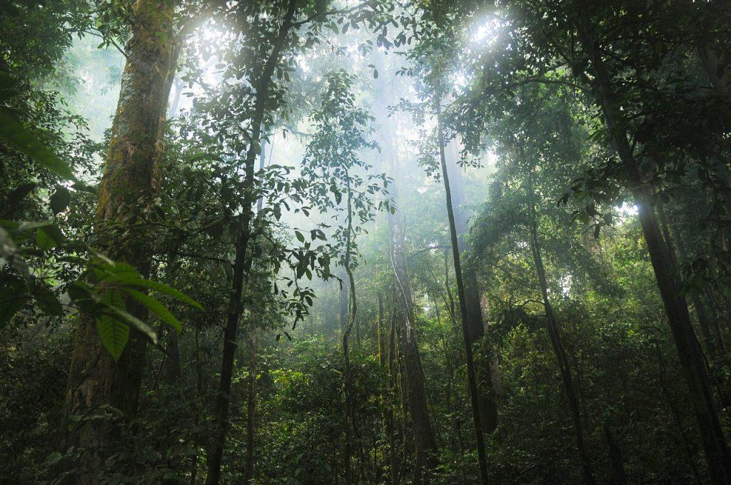Kewajiban Manusia Terhadap Hutan